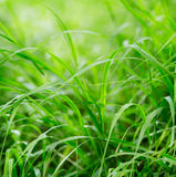 Green grass on a beautiful day. Stock Photo