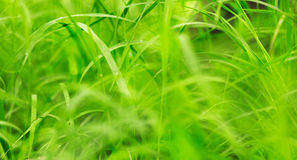 Green grass on a beautiful day. Stock Image