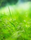 Green grass on a beautiful day Royalty Free Stock Images