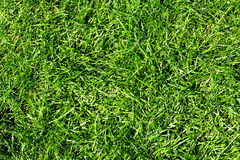Green grass. Stock Image