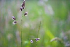Green grass. Beautiful green grass. macro photo Royalty Free Stock Photography