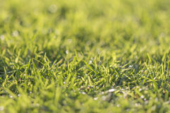 Green grass. A beautiful meadow. Juicy and fresh. Let's play golf Royalty Free Stock Photography
