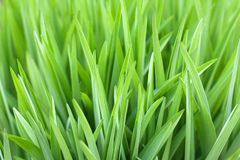 Green grass beautiful natural background for design stock images