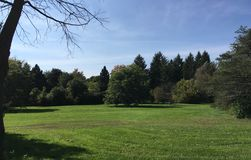 Green grass. Beautiful nature city Park green foliage. Cut grass, grass, autumn, and lush greens. Sunny day and a positive mood Stock Photo