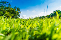 Green grass in beautiful park over blue sky Stock Photo