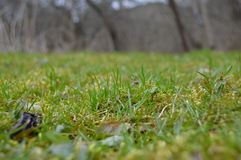 Green grass Royalty Free Stock Image