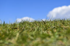 Green Grass behind blue sky! Royalty Free Stock Image