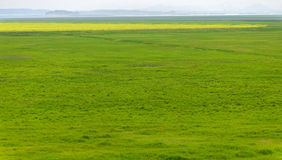 Green grass. This is a big grass in the south of CHINA Royalty Free Stock Images