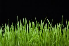 Green grass on black Stock Photography