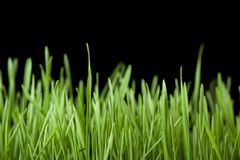 Green grass on black Stock Images