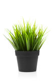 Green grass in black pot Stock Photos