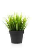 Green grass in black pot Stock Photos