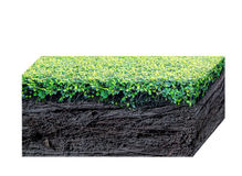 Green grass and black root isolated Royalty Free Stock Images