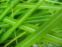 Green Grass Blades Stock Photos