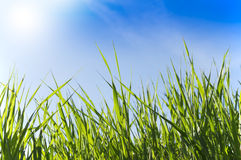Green grass blades against blue sky with clouds Royalty Free Stock Photos