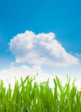 Green grass blades and clouds with blue sky background Stock Photography