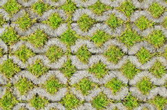 Green grass in the block brick Royalty Free Stock Photography