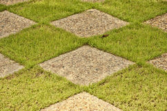 Green grass and blocks. Beautiful vivid leaves of wild fern Royalty Free Stock Image
