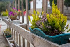 Green grass and blooming flowers in flower pots on fence. Flower containers on wooden fence in perspective. Terrace design. Patio decoration concept. Hanging royalty free stock image