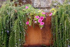 Green grass and blooming flowers in rusty metal pot on brick wall. Weathered flower container with plants. Terrace design. royalty free stock image