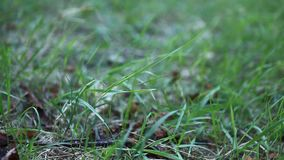 Green grass blown by wind stock footage