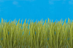 Green grass  . Green grass on a blue background Stock Images