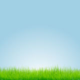 Green grass with blue background. Vector illustration Royalty Free Stock Photo