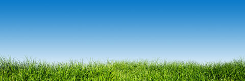 Green grass on blue clear sky, spring nature panorama. Green grass on blue clear sky, spring nature theme. Panorama or banner. Super high resolution, premium stock photo