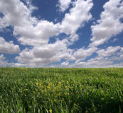 Green grass and blue cloudy sky Royalty Free Stock Images