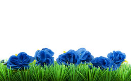 Green grass with blue flowers Royalty Free Stock Photo