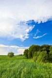 Green grass blue skies Stock Photo