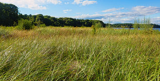 Green grass and blue skies Stock Photos