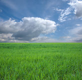 Green Grass and Blue Sky. Spring time in europe Stock Photo