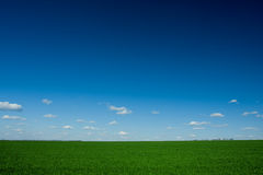 Green grass and blue sky. Fresh green grass and blue sky with clouds Stock Photos