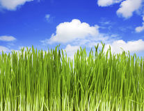 Green grass, blue sky Stock Images