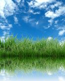 Green grass with blue sky Royalty Free Stock Image