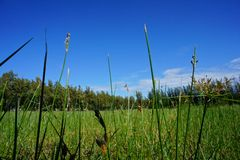 Green grass with Blue sky Stock Photos