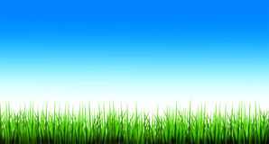 Green grass and blue sky. An illustration of green grass with the background of blue sky illustration stock illustration