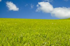 Green grass with blue sky. Green grass field with blue sky and clouds Stock Photography