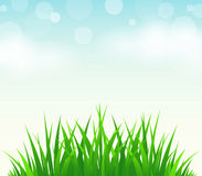 Green grass,blue sky Royalty Free Stock Photos