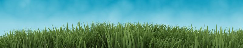 Green Grass  on blue sky Royalty Free Stock Images