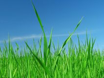 Green grass and blue sky. stock images