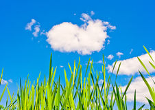 Green Grass and Blue Sky. Landscape with green grass on blue sky background royalty free stock photo
