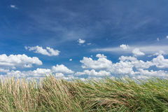 Green grass. Blue Sky and green grass Royalty Free Stock Images