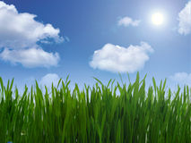 Green grass and blue sky. Green grass and clouds in the blue sky Royalty Free Stock Image