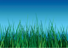 Green grass on blue sky. Green grass on blue sky background. Vector illustration Stock Images