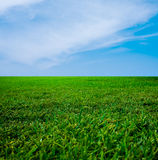 Green Grass and The Blue Sky Stock Images