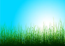 Green grass and blue sky. With sun. Additional vector format in EPS (v.8 Royalty Free Stock Images
