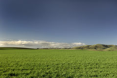 Green Grass & Blue Sky. A vibrant field of green grass under a deep blue sky Stock Photo