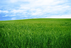 Green grass and the blue sky Stock Photos